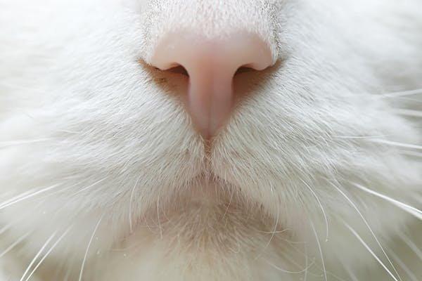 nose-bleed.jpg